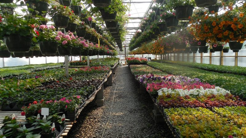 Landscape or Nursery Management (BS)